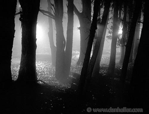 shadowpics
