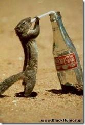 squirel drinks coca!!!