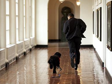 Obamy family with their dog Bo