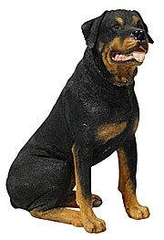 rottweiler, रोट्विइलर