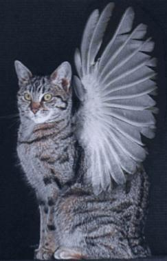 एंजल Cat