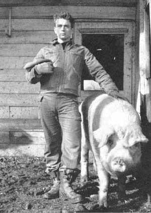 James Dean wallpaper containing a sow titled James Dean