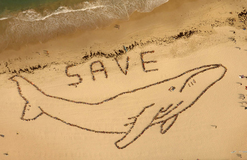 Save the Whales - animal-rights Photo