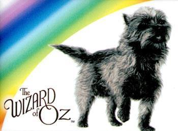 Wizard of Oz - Toto