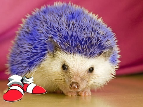 the real sonic