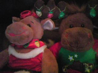 stechpalme, holly and Hal Moose