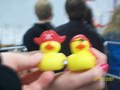 Pirate Duckies <3333333