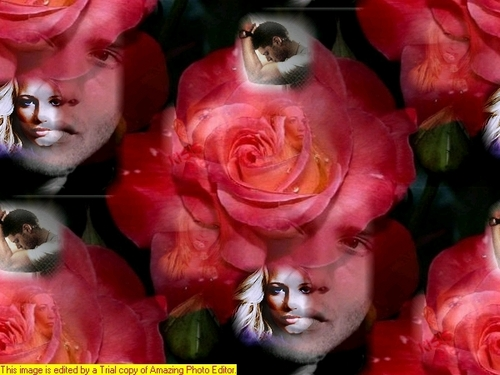 Dean Winchester kertas dinding containing a bouquet, a rose, and a camellia titled dean and serena