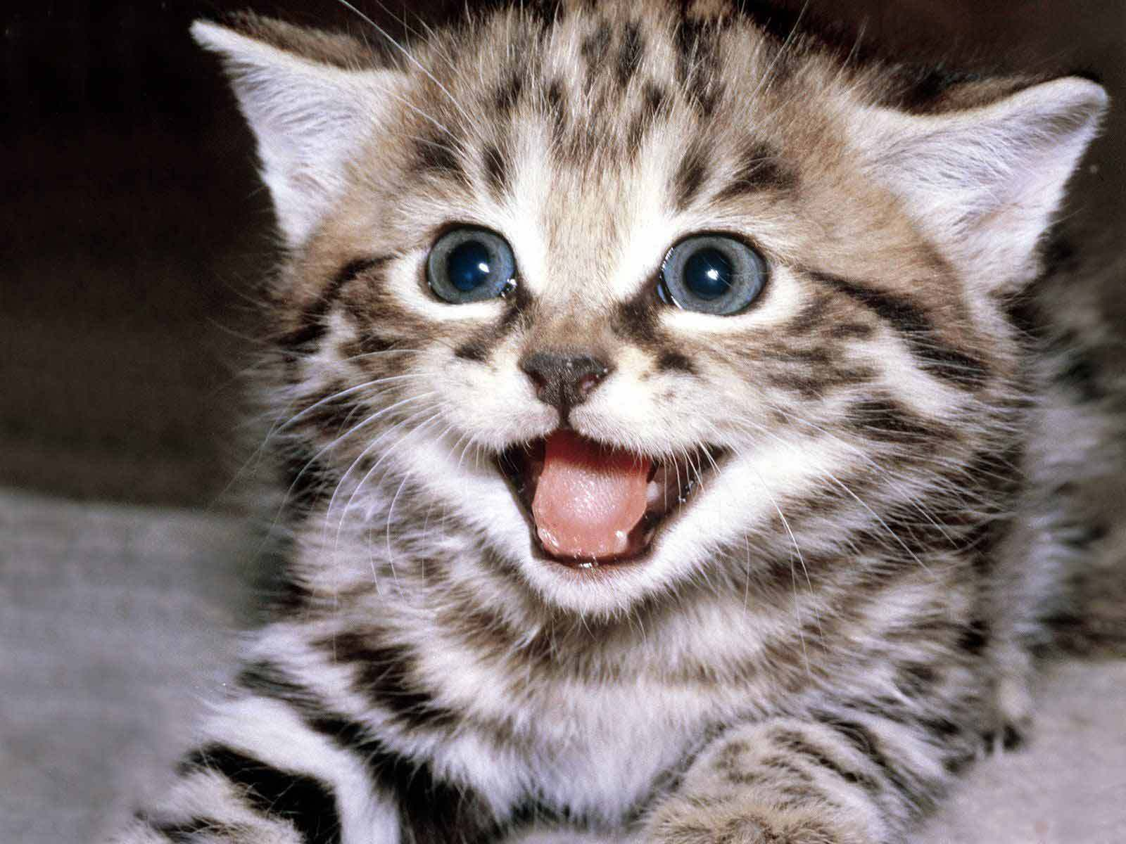 Kittens happy kitten