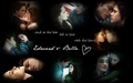 Edward & Bella <333 - edward-and-bella wallpaper
