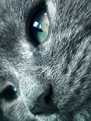 GrayStripe Is Watching 你