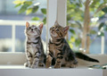 Kittens - cats photo