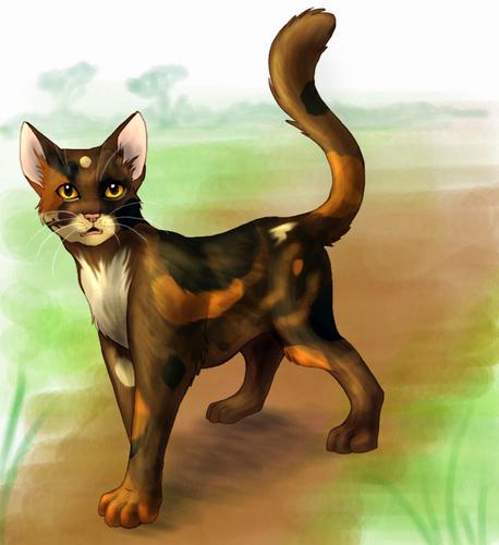 SpottedLeaf, ThunderClan's Old Medicine Cat
