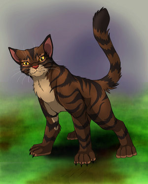 Thundersclan Images TigerClaw The Cat That Craves Power Wallpaper And Background Photos