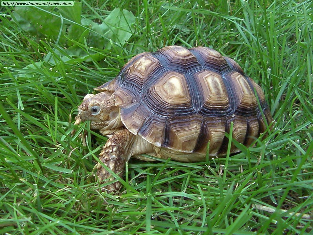 turtle and