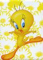 Tweety Bird Poster