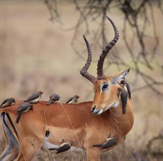 Wild wanyama