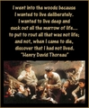 Dead Poets Society - dead-poets-society photo