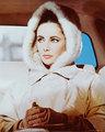 Elizabeth Taylor - elizabeth-taylor photo