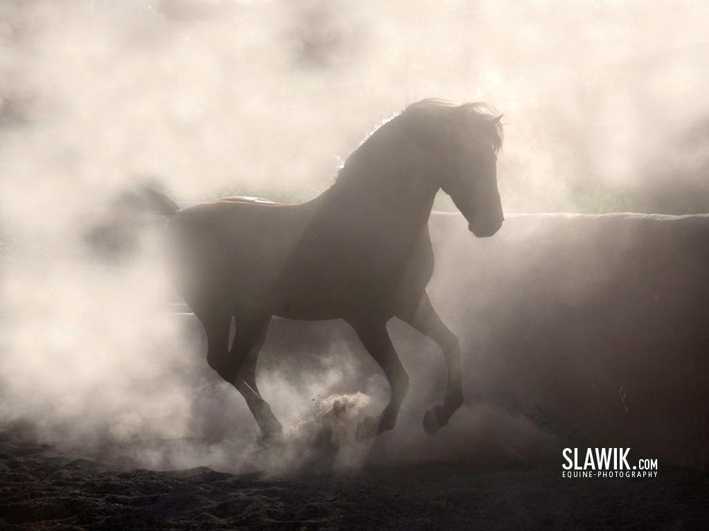 Slawik horse wallpapers