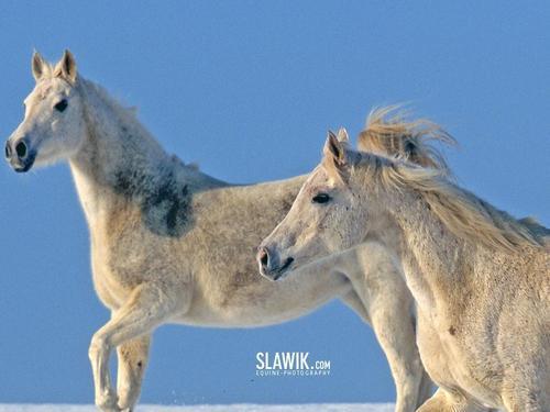 Slawik horse karatasi za kupamba ukuta