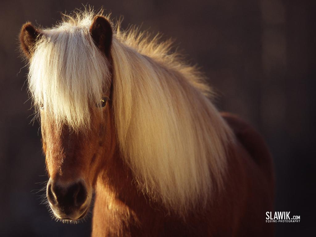 Horses Images Slawik Horse Wallpapers Hd Wallpaper And