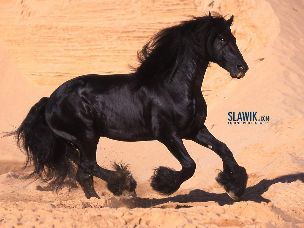 Slawik Horse Wallpapers Horses Wallpaper 6070982 Fanpop Fanclubs