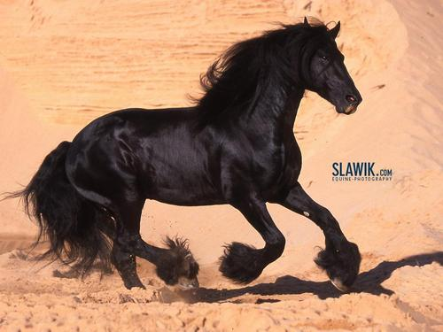 Horses wallpaper called Slawik horse wallpapers