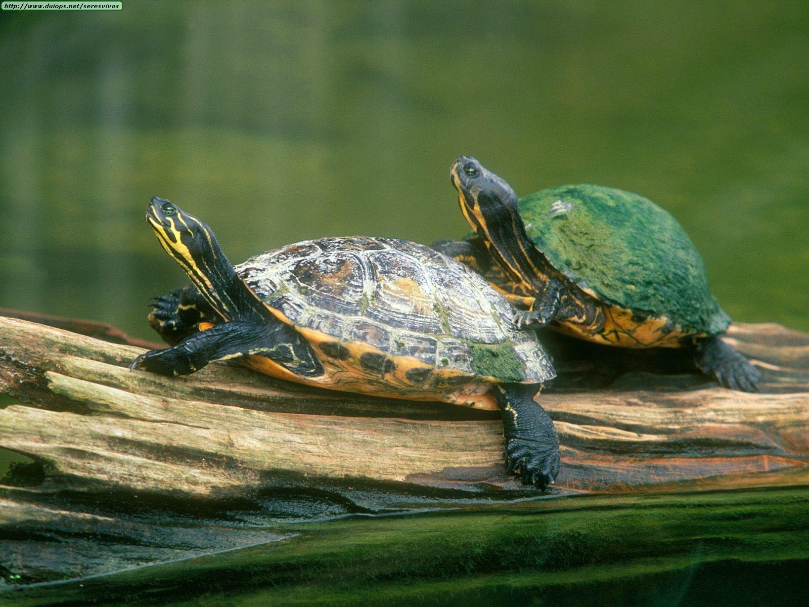 Turtles turtles photo 6007158 fanpop - Cute turtle pics ...