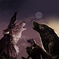evening howling - werewolves photo
