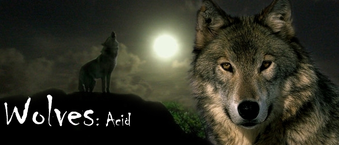Twilight Wolf Pack As ...