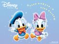Baby Donald canard and marguerite, daisy canard
