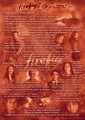 Firefly life lessons - firefly photo