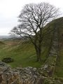Northern England - Hadrian's Wall, Sycamore Gap  - robin-hood-prince-of-thieves photo