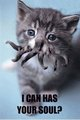 i can has... - hp-lovecraft photo