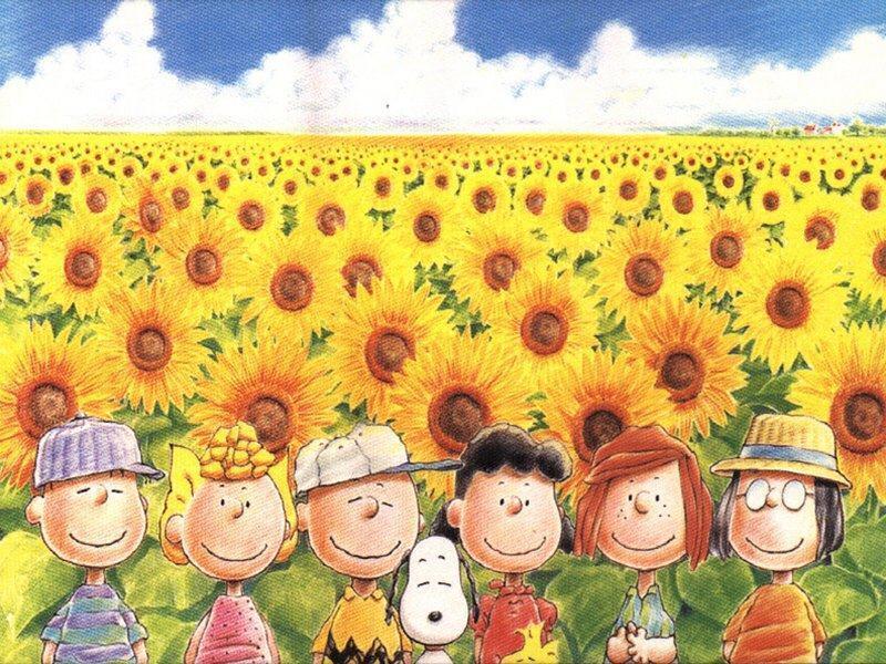 sunflowers wallpaper. peanuts in sunflower meadow
