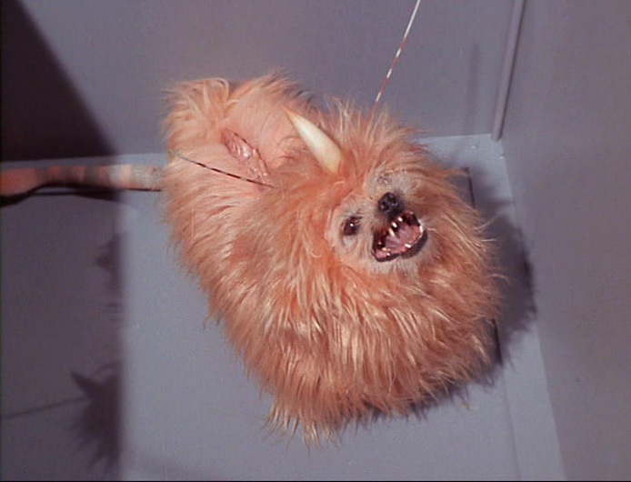 http://images2.fanpop.com/images/photos/6300000/-Space-Dog-The-Enemy-Within-star-trek-the-original-series-6352208-694-530.jpg