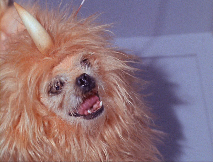 """Star Trek: The Original Series """"Space Dog"""" - The Enemy Within"""
