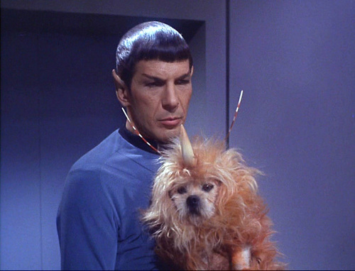 "Star Trek: The Original Series wallpaper entitled ""Space Dog"" - The Enemy Within"