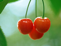 Cherries Wallpaper - fruit wallpaper