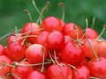 Cherry Fruit Wallpaper - fruit wallpaper