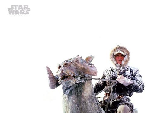 Han Solo দেওয়ালপত্র