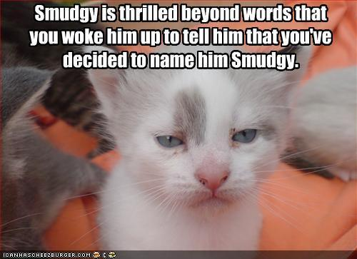 Smudgy Is Thrilled Beyond Words.