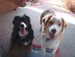 my dog(Milly) and 123cosmo4's dog (Mo) - dogs icon