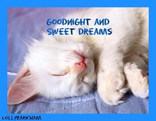 sweet dreams kitten
