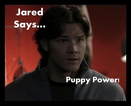 Jared Says...