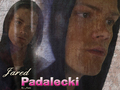 jared-padalecki - Jared wallpaper