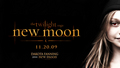 New Moon - team-jacob wallpaper