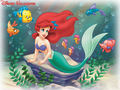 The Little Mermaid - classic-disney wallpaper