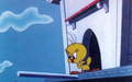 Tweety Bird Screencap - tweety-bird screencap